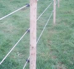 Buy Electric Fencing