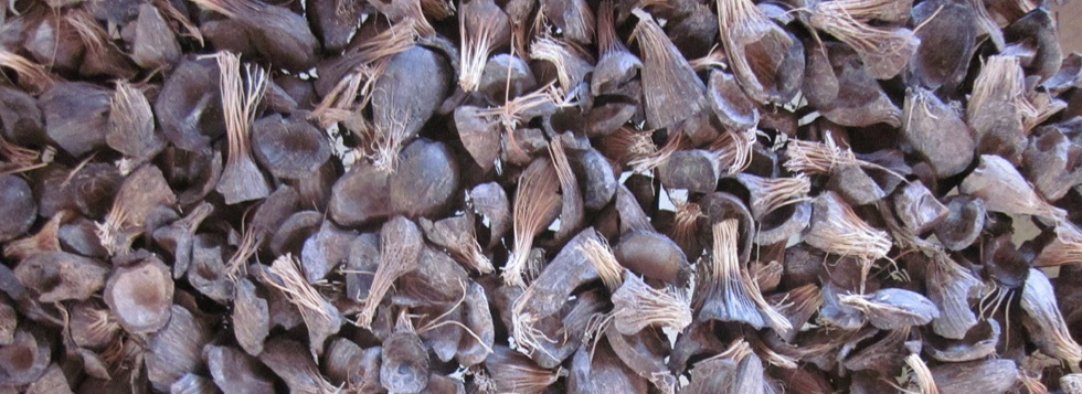 Buy Palm Kernel Shell