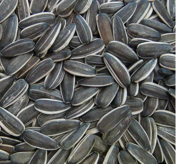 Buy High quality Sunflower seeds