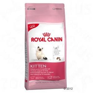 Buy Royal Canin Kitten - Digestive Health 10kg
