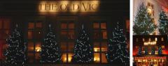 Display Christmas trees - up to 25 feet