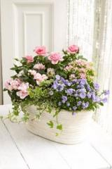 Mixed Flowering Planter