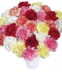 30 Classic Carnations