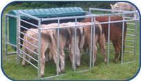 Standard Calf Creep Feeder