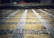 Basal Platforms: Over Piles