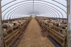 Sheep Houses