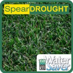 Drought tolerant turf