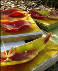 Teak Leaf Floating Candles