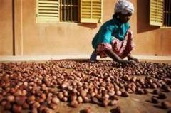 Bethel nuts