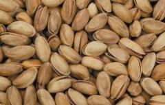 Turkish Pistachio`s Good quality from Pistachios