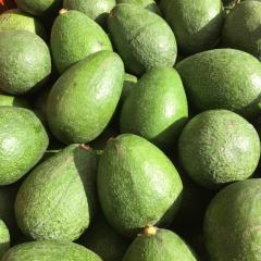 Fresh Hass Avocado and Fuerte Avocado For Sale