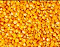 Yellow Corn for Animal Feed - Ukrainian Origin