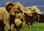 Order Safaris and beaches mix Kenya Holidays