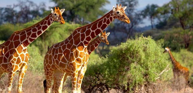 Order Kenya Wildlife Adventure tour