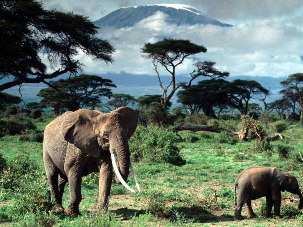 Order African safaris