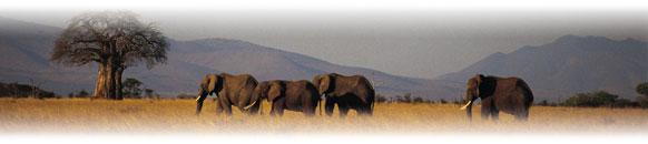 Order Tanzanian safari & Zanzibar tour