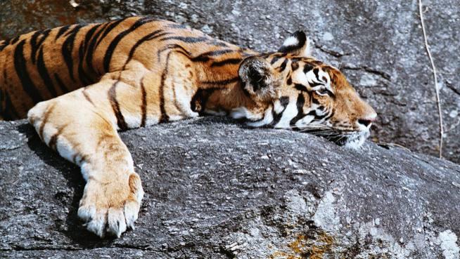 Order Central India & Wildlife holidays