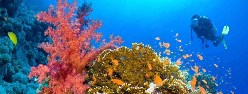 Order Diving holidays