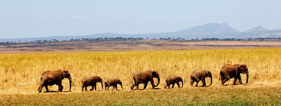 Order Safaris & wildlife holidays