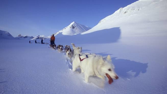 Order Stockholm & dog-sledding in Lapland tour
