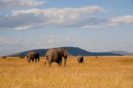 Order Walking Safari