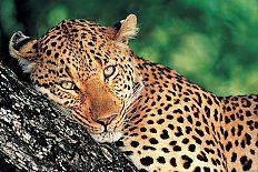 Order Wildlife holidays