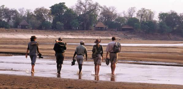 Order Walking Safaris