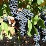 Order Cape Winelands Tour