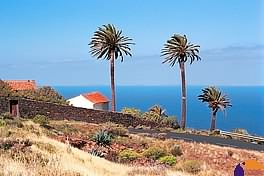 Order Canaries Classic holidays