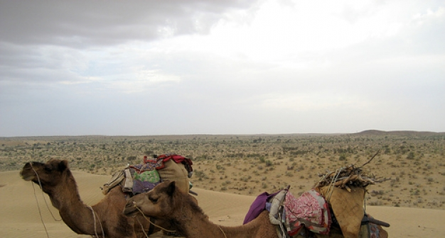 The Express Camel Through India tour