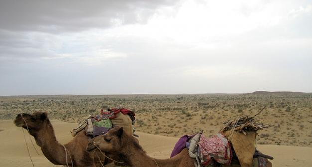Order The Express Camel Through India tour