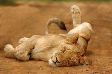 Order Namibia Safaris
