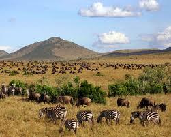 Order Africa/Safari Holidays