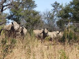 Order Southern Africa holidays