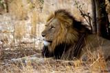 Order Safari Holidays