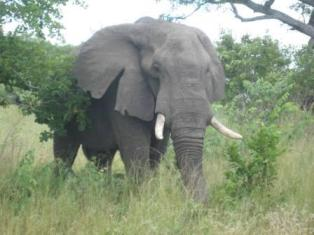 Order South Africa tour including Zambia & Victoria Falls