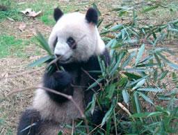 Order Panda Experience tour