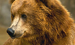 Order Bears and Volcanoes tour