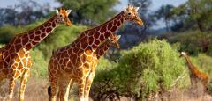 Kenya Wildlife Adventure tour