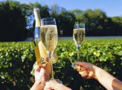 Wine holidays