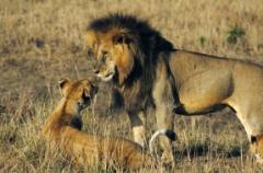 Wildlife Holidays for families