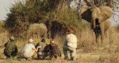 Family Safari Tips