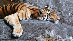 Central India & Wildlife holidays