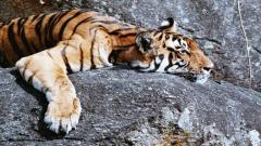Central India & Wildlife holidays