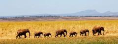 Safaris & wildlife holidays
