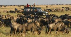 Game Drives safari