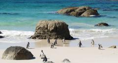 Cape Town's Best Family Beaches tour