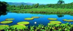 A wildlife adventure Brazil Tour