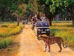 The Kanha national park tour