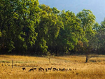 The Bandhavgarh National Park tour